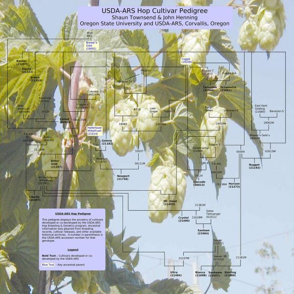 USDA-ARS Hop Cultivar Pedigree