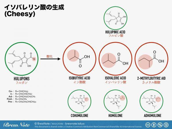 イソバレリン酸の生成